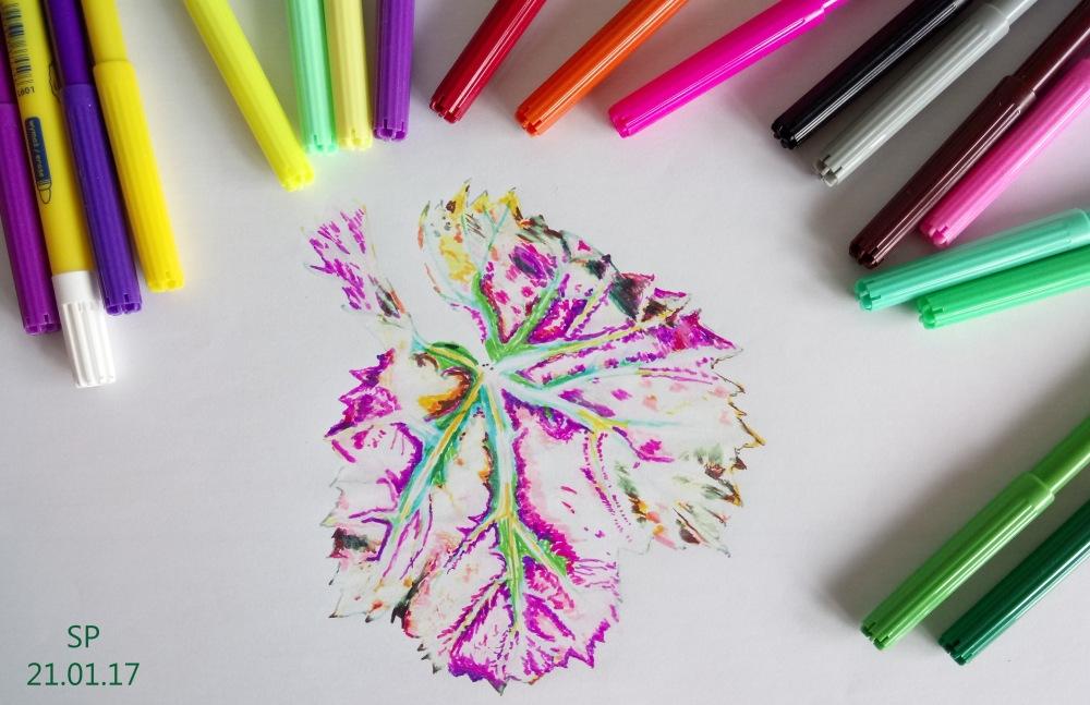 leaf drawing with felt pens