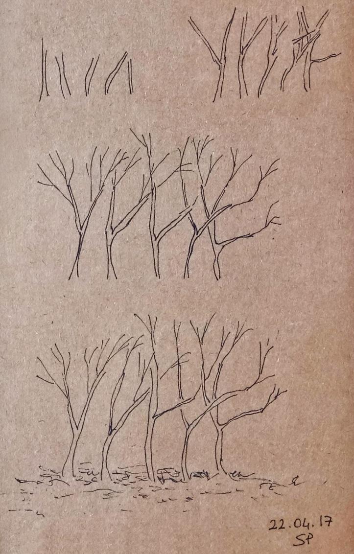 bush drawing steps