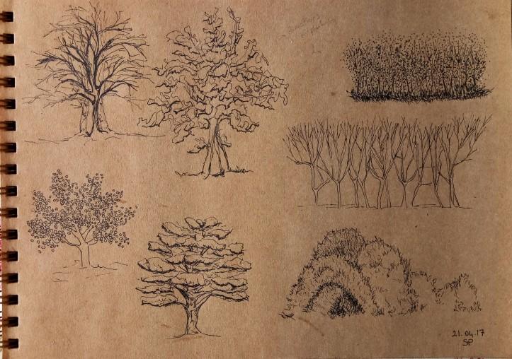 bush fine line drawing