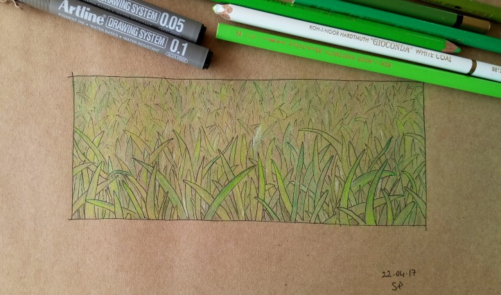 fine line grass drawing 3