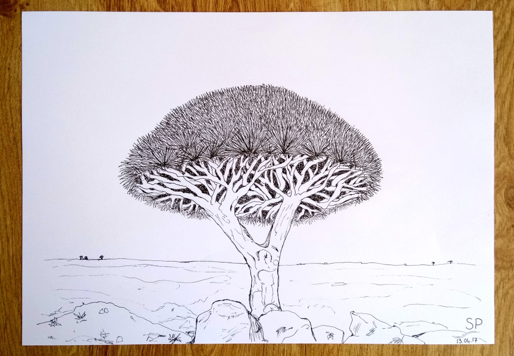 fine line socotra dragon tree drawing.jpg