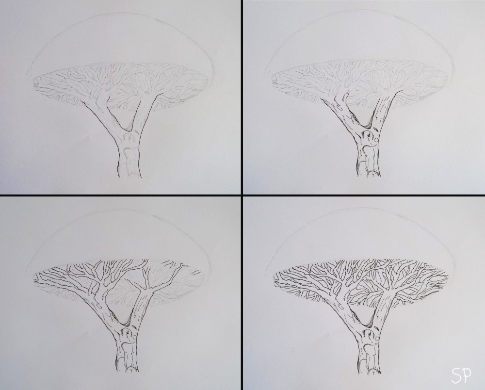 socotra dragon tree drawing 2