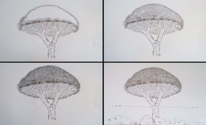 socotra dragon tree drawing 3