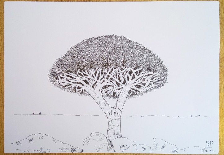 socotra dragon tree drawing 4
