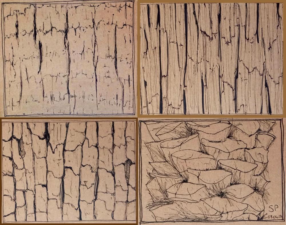 tree trunk textures