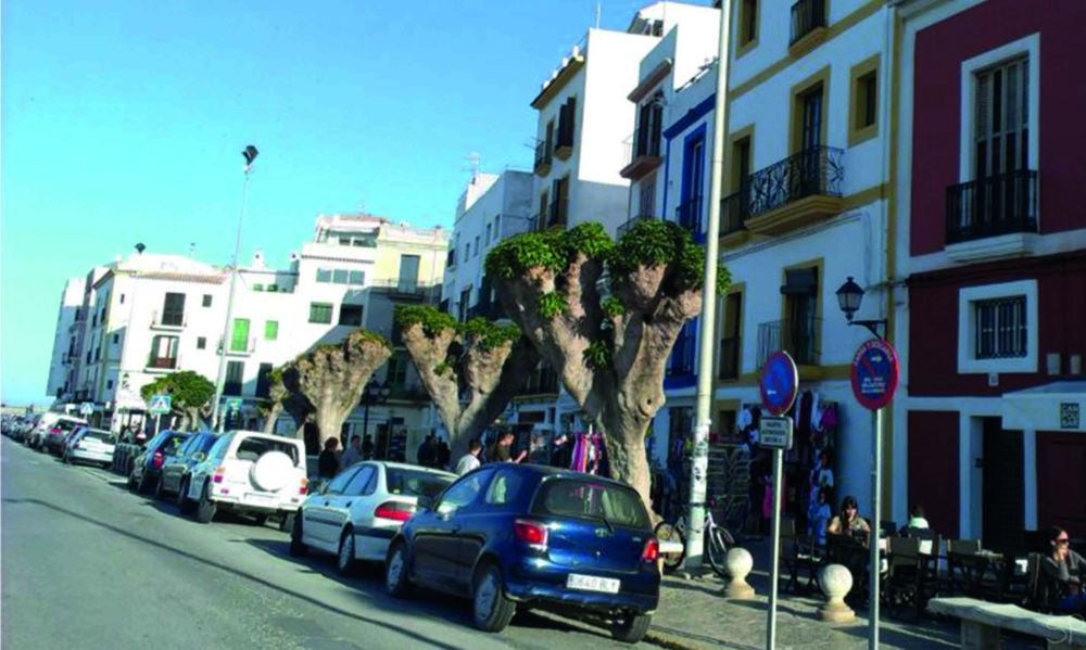 trees in ibiza sp.jpg