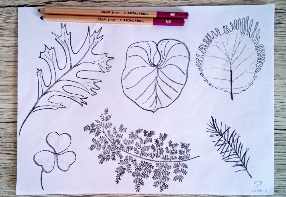 leaf sketches drawing