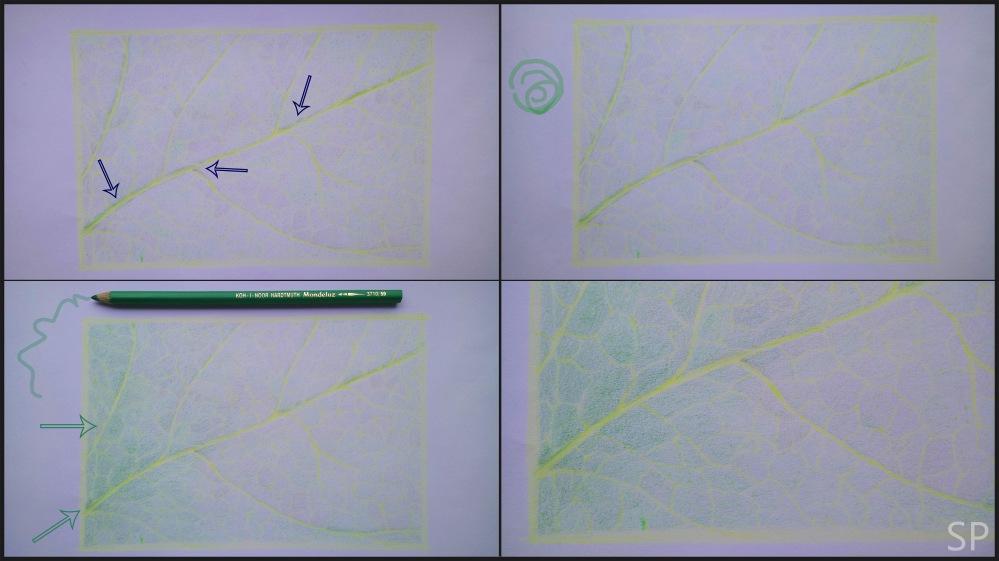 leaf vein drawing 2