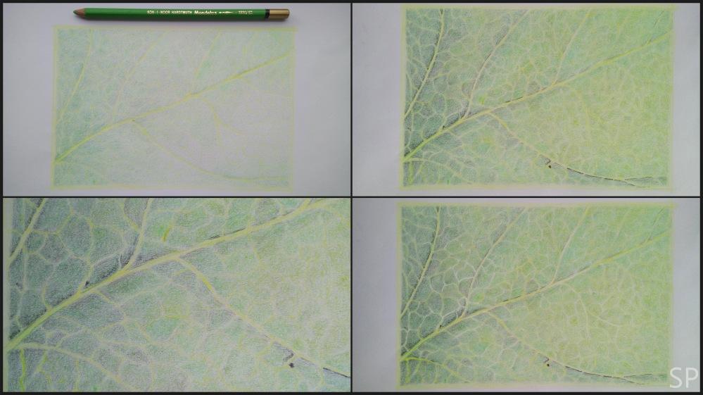 leaf vein drawing 3