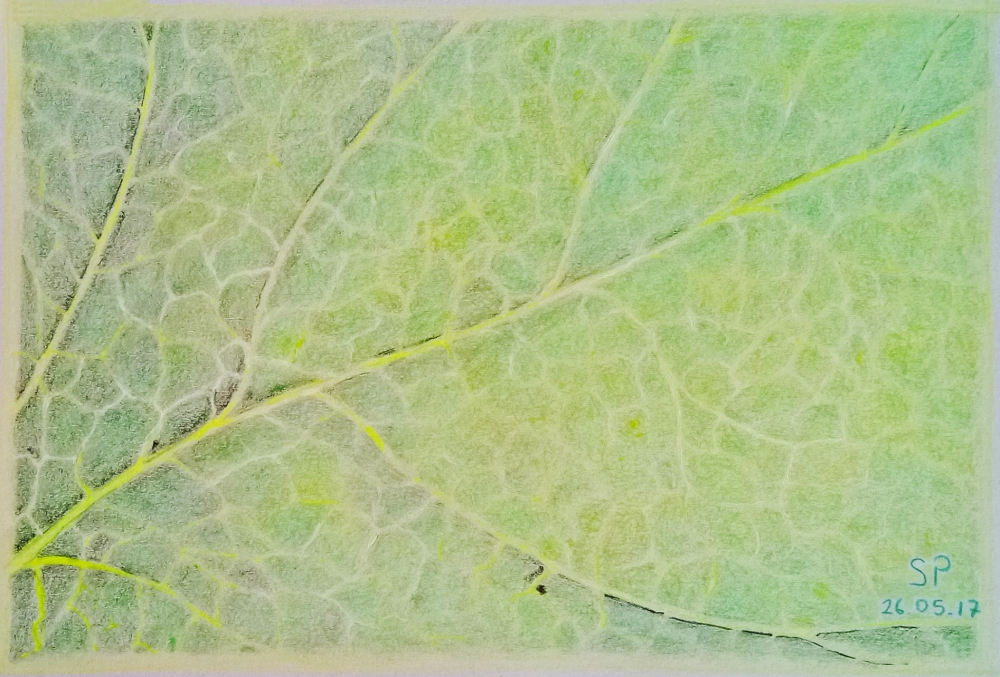 leaf vein drawing coloring pencils white gel pen