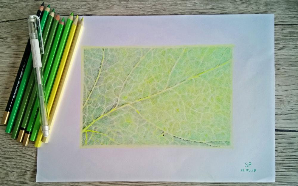 leaf vein drawing