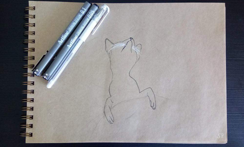 sleeping cat drawing 1