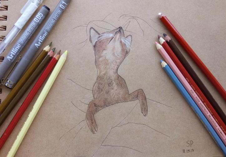 sleeping cat drawing 2