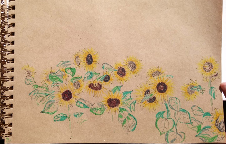 sunflowers drawing progress