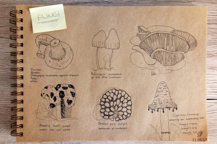 fungi drawing mushroom types.jpg