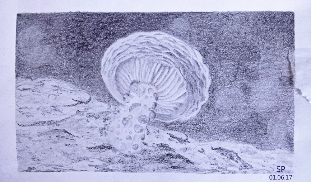 mushroom drawing sp 2