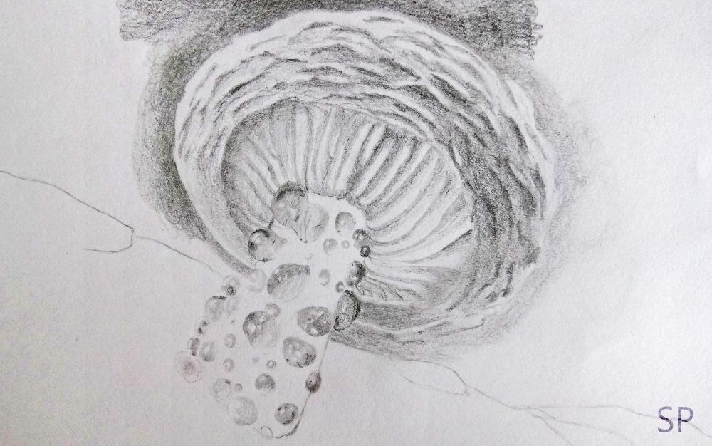 mushroom drawing step 4
