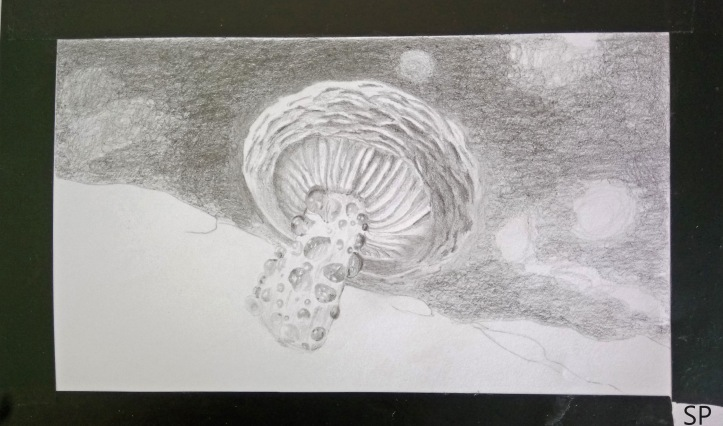 mushroom drawing step 5 background
