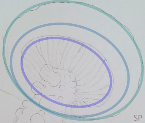 mushroom drawing steps 2 cap