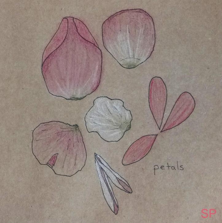 petal drawings