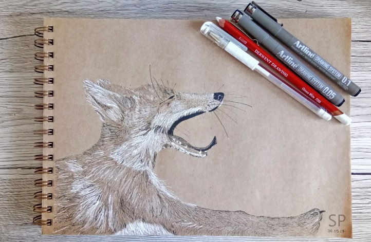 yawning fox drawing 3