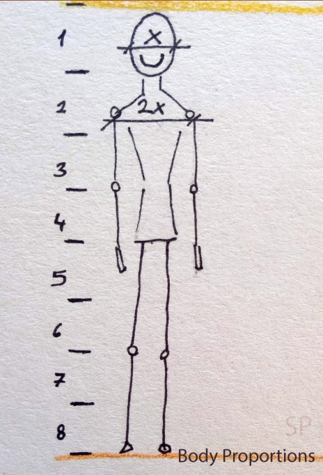 beginner body proportions