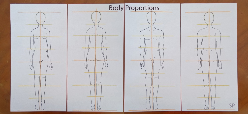 Body proportions simple.jpg