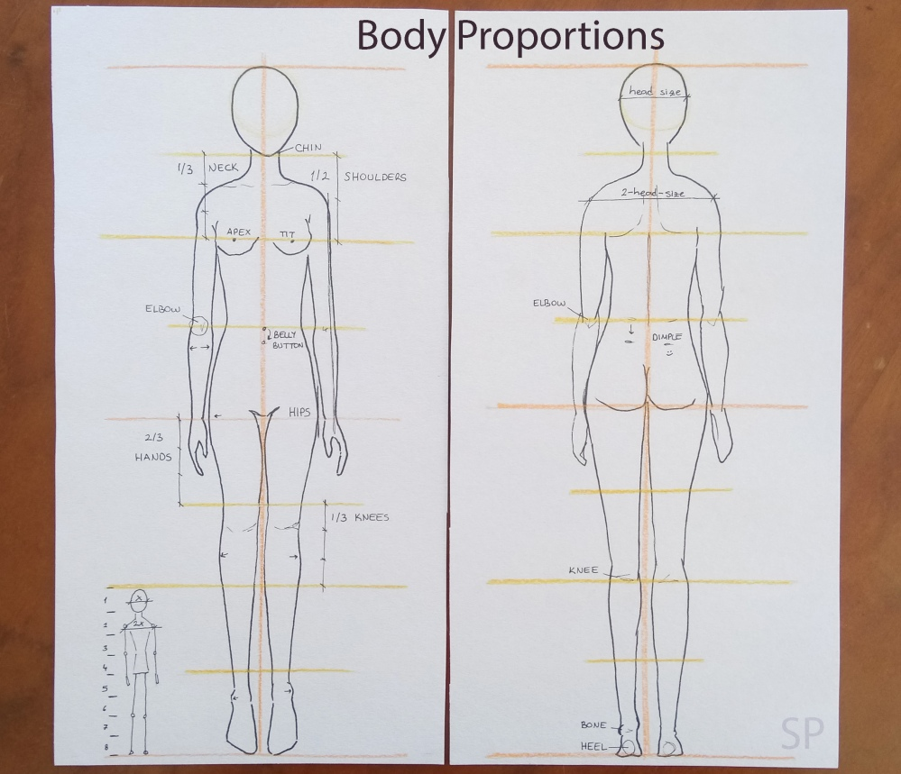 Female body proportions.jpg