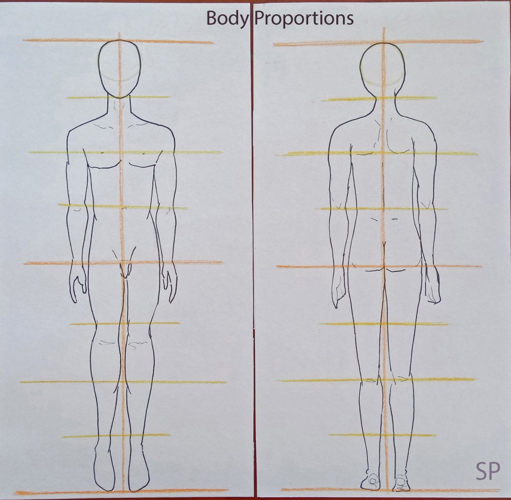 Male body proportions.jpg