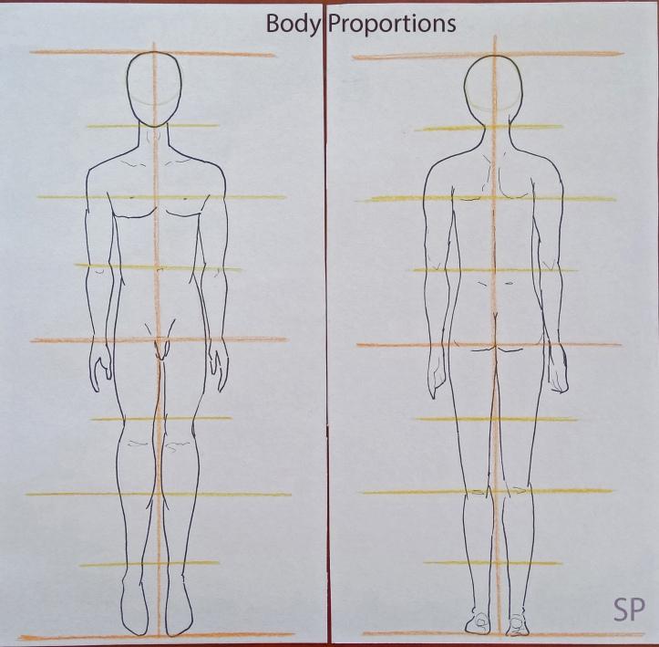 Male body proportions.jpg