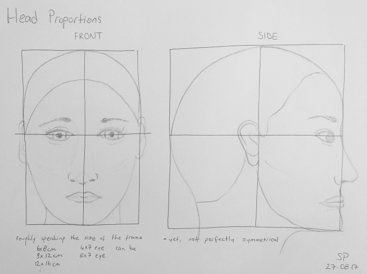 head proportions 3