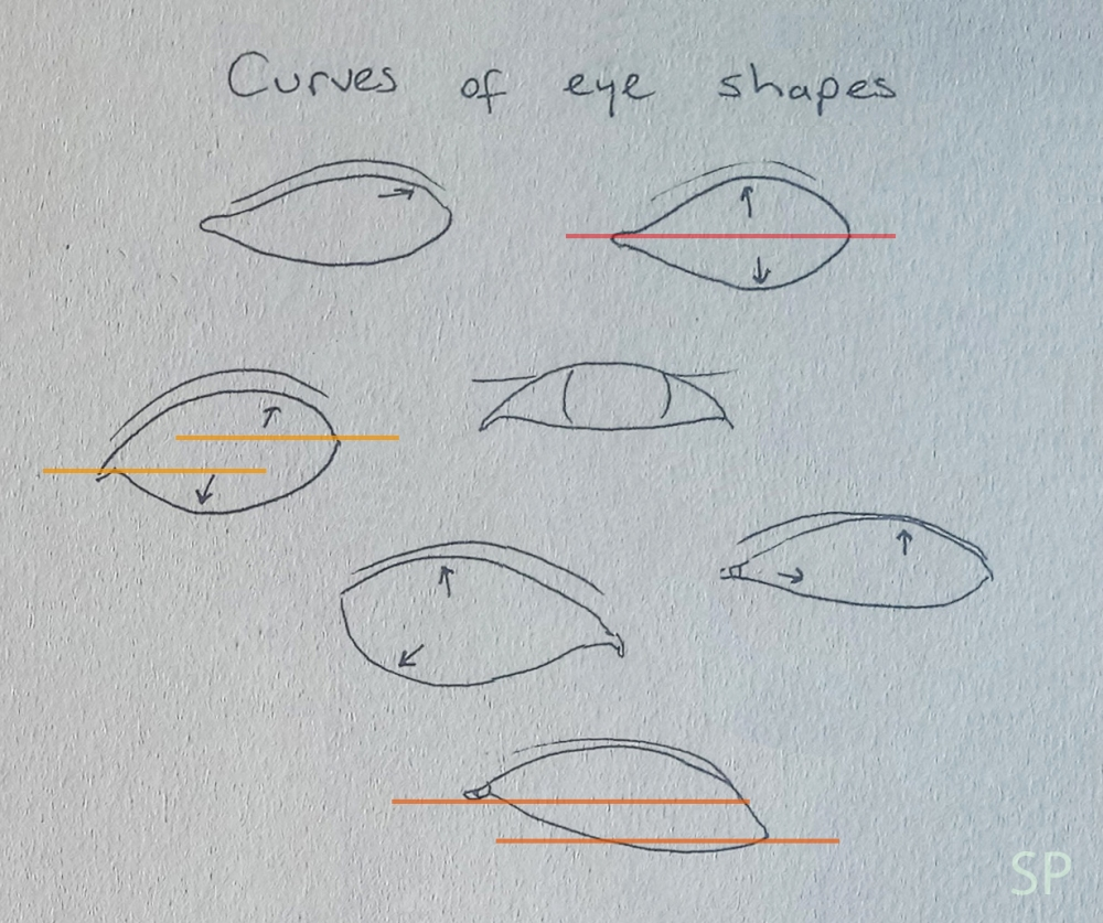 eye shape curves