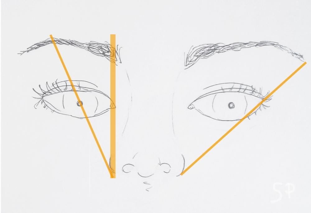 eyebrow guidelines