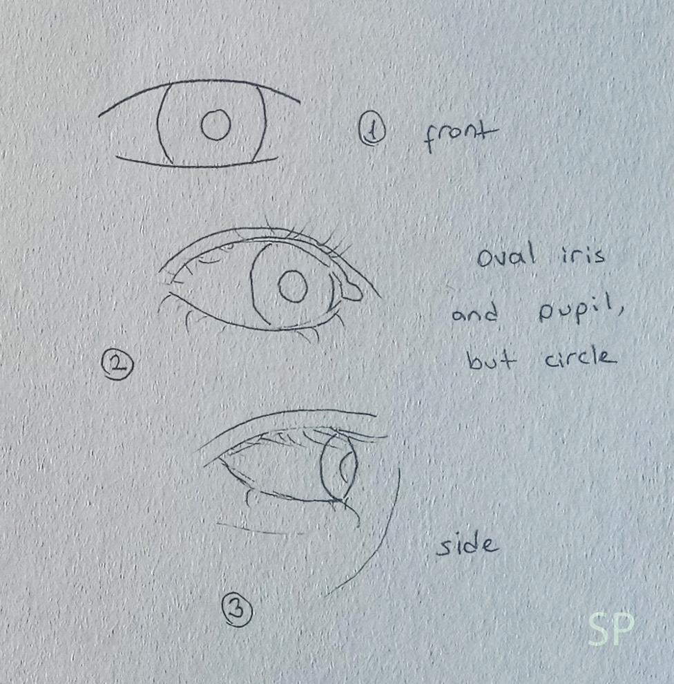 iris position eye