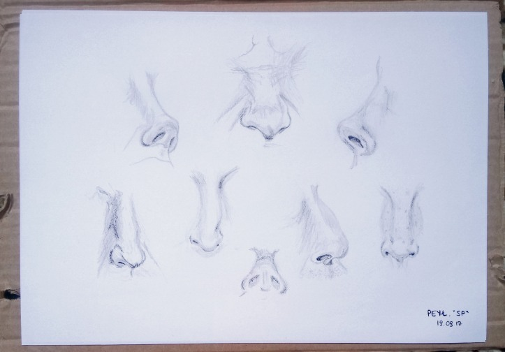 nose drawings 3