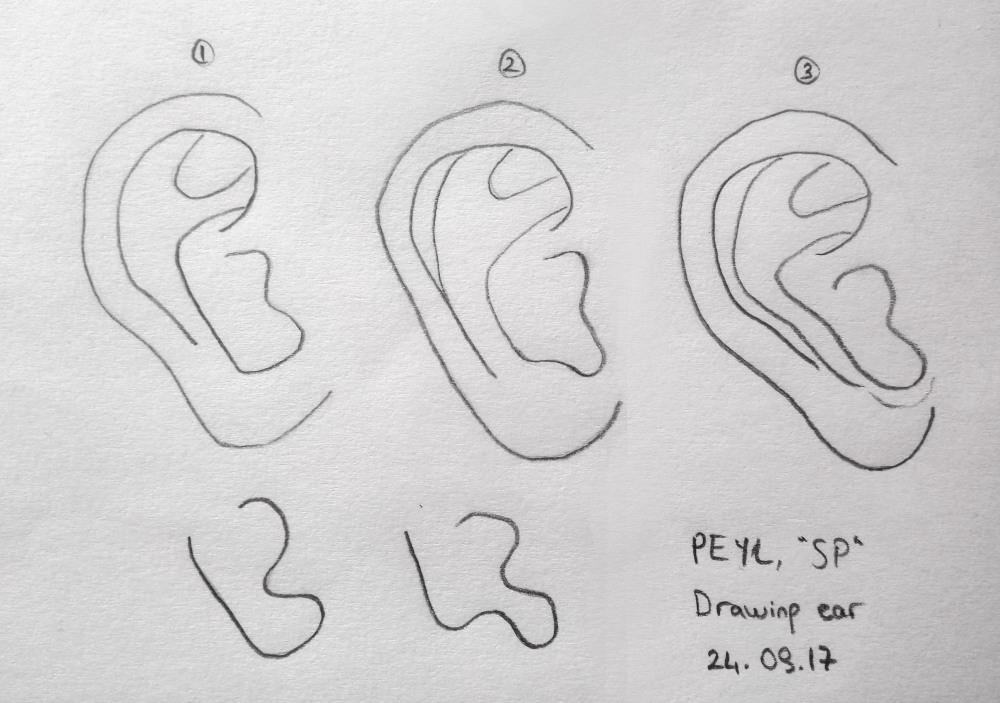 anti helix ear drawing