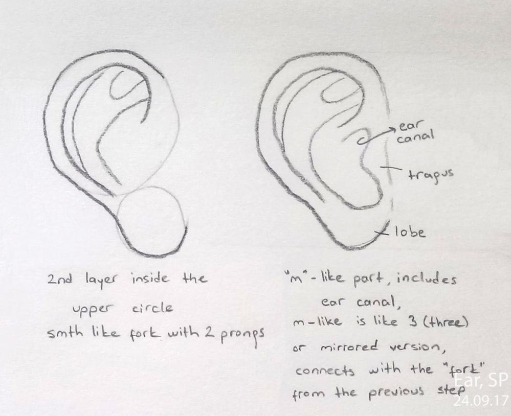 ear drawing steps 2