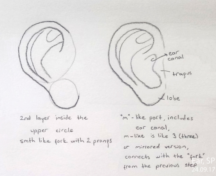 ear drawing steps 2