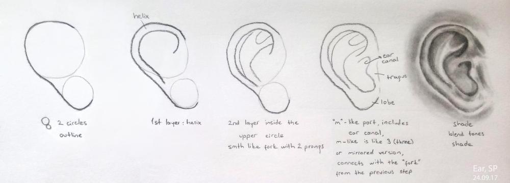ear drawing steps 4