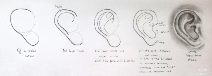 ear drawing steps 4