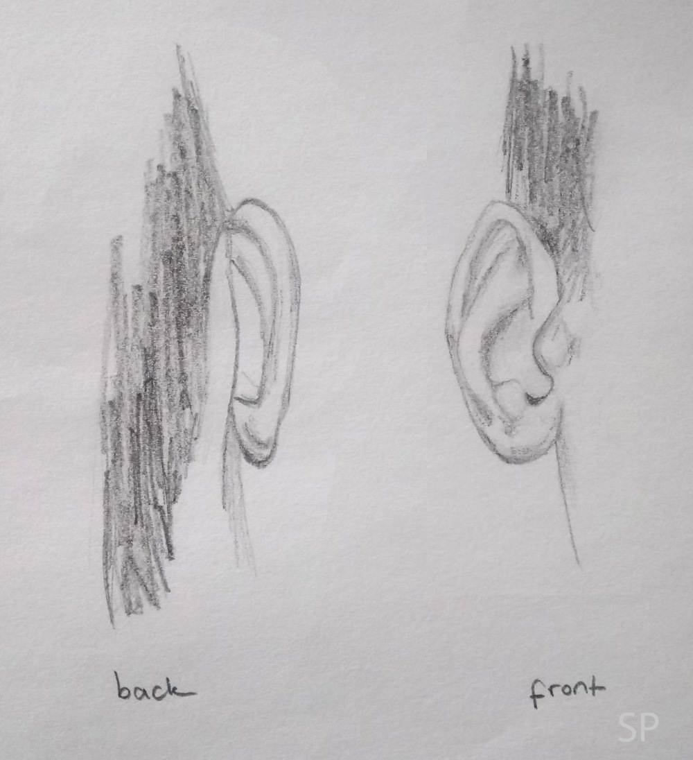 ear drawings front and back