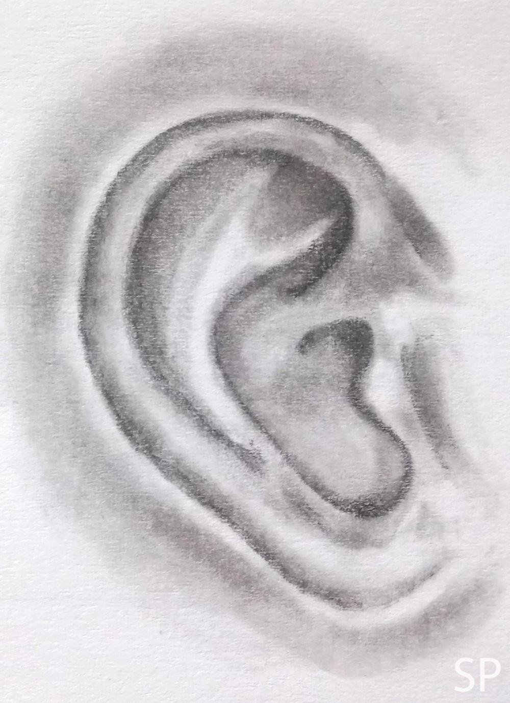 ear shading steps.jpg