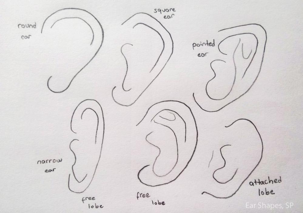ear shapes 2