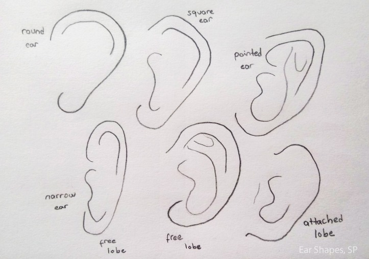 ear shapes 2