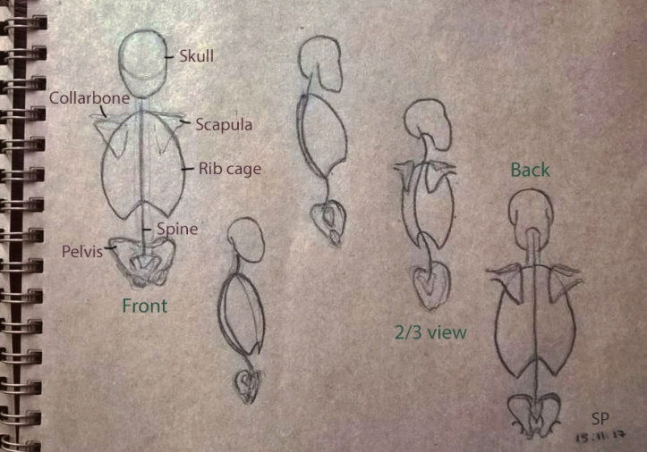 torso skeleton 3