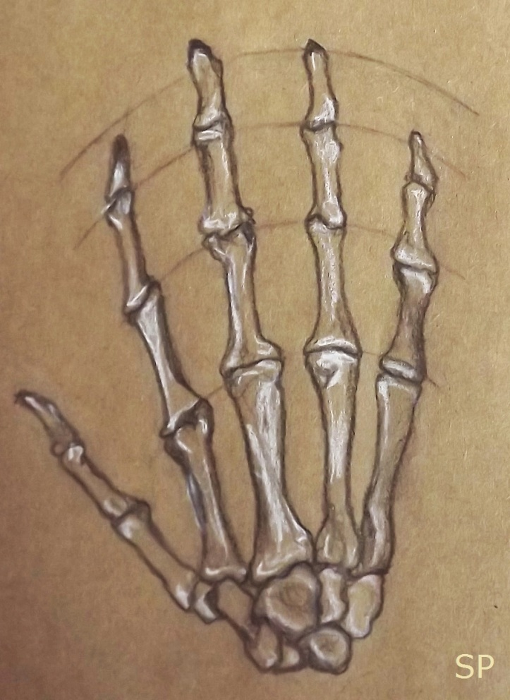 hand skeleton drawing