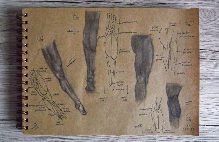leg muscles leg drawings.jpg