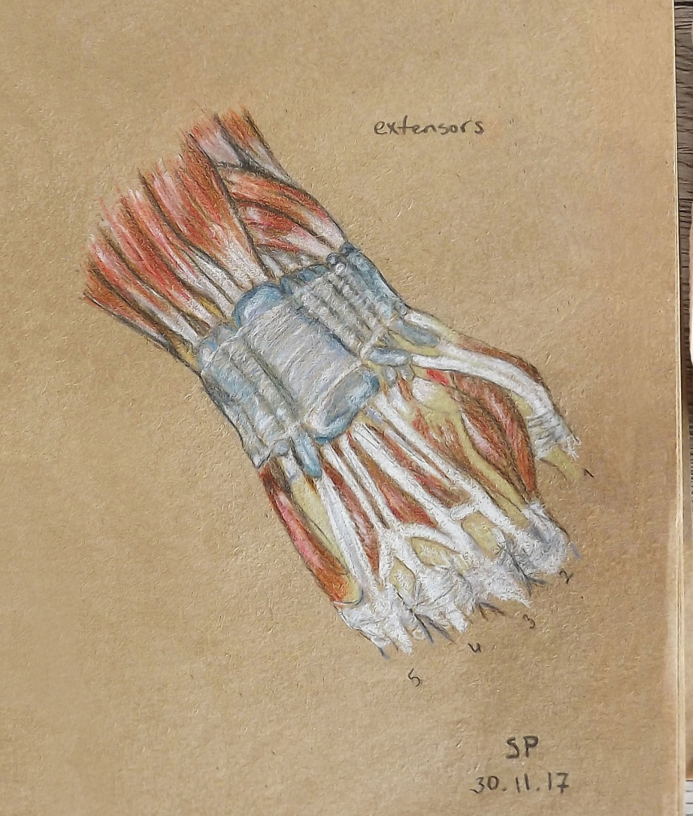 muscles of hand