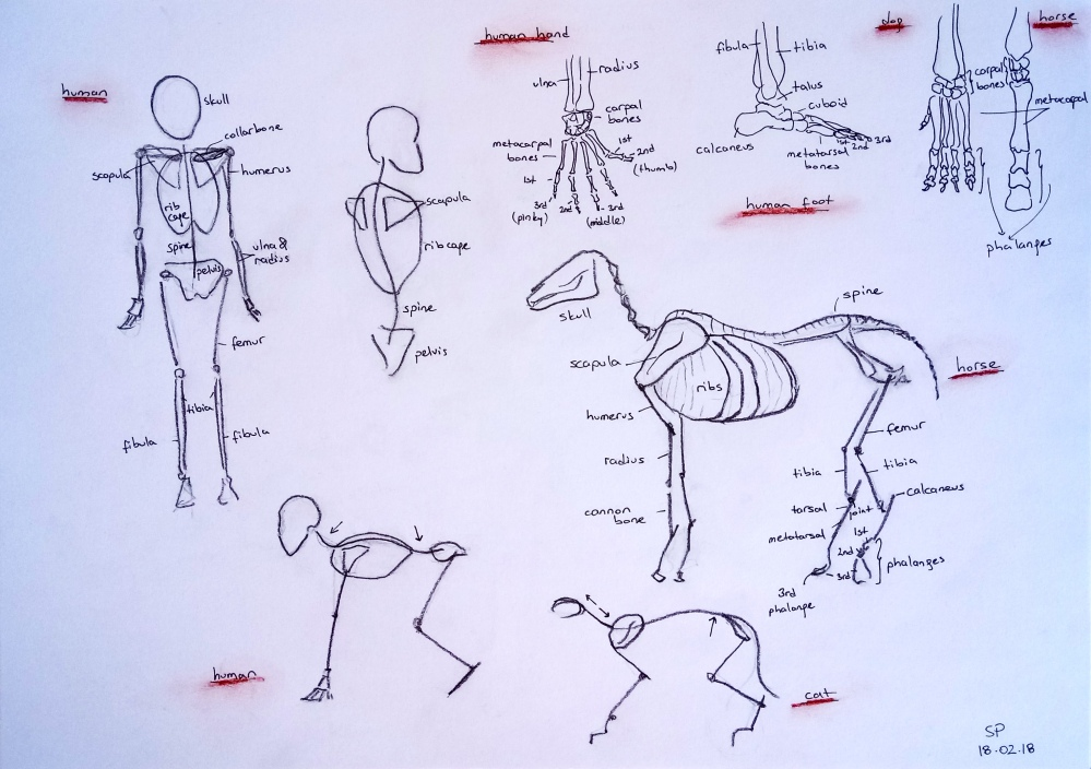 human animal anatomy comparison