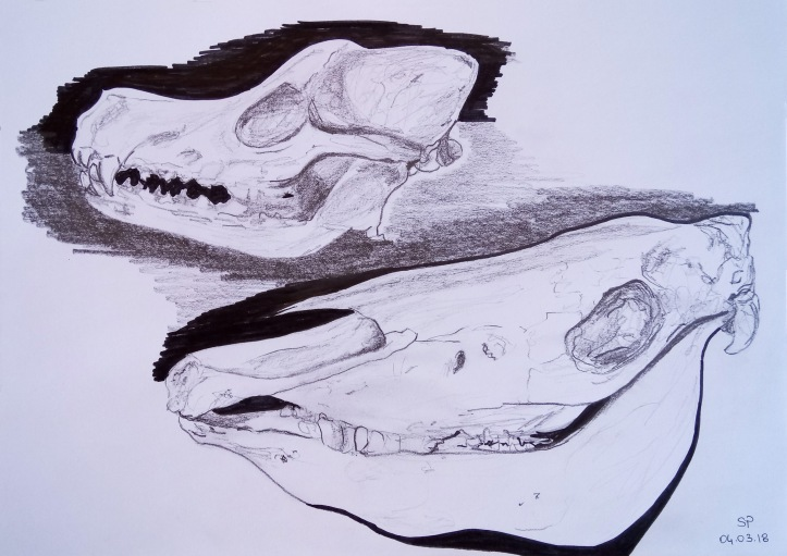 dog and horse skulls
